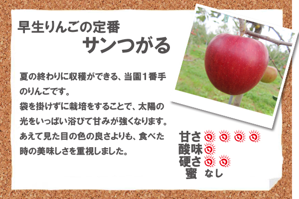 早生りんごの定番サンつがる 夏の終わりに収穫ができる、当園1番手のりんごです。袋を掛けずに栽培をすることで、太陽の光をいっぱい浴びて甘みが強くなります。あえて見た目の色の良さよりも、食べた時の美味しさを重視しました。