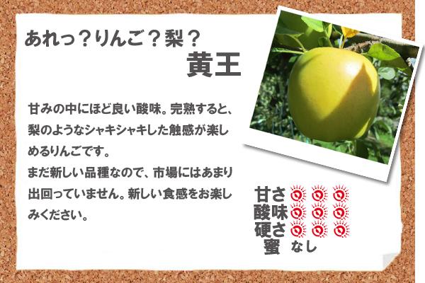 あれっ?りんご?梨?黄王 甘みの中にほど良い酸味。完熟すると、梨のようなシャキシャキした触感が楽しめるりんごです。まだ新しい品種なので、市場にはあまり出回っていません。新しい食感をお楽しみください。